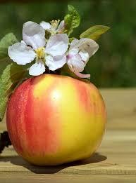 African Mango opiniones - foro, comentarios, efectos secundarios?